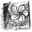 Metamorfoze, Medgidia, grafica